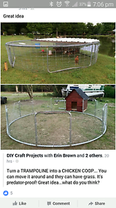 Trampoline - working or make chicken coupe Windsor Hawkesbury Area Preview