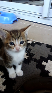 Nearly 3 month y/o kittens Liverpool Liverpool Area Preview