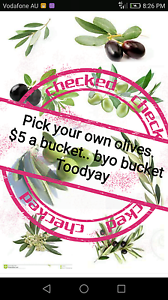 PICK YOUR OWN OLIVES. BYO BUCKET Toodyay Toodyay Area Preview