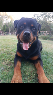 Wanted: Pet sitter for lennox