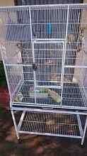 Bird Cage For Sale Kelmscott Armadale Area Preview