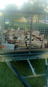 Fire wood for sale Quirindi Liverpool Plains Preview