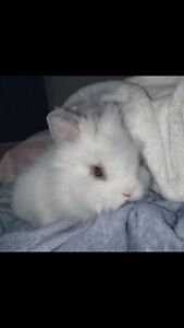 Bunny for sale.
