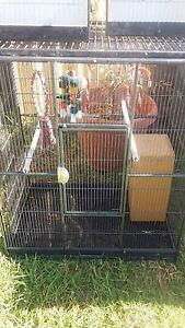 2 x medium cages/avairy Elizabeth Downs Playford Area Preview