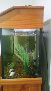Fresh water tropical fish tank with fish Charlestown Lake Macquarie Area Preview