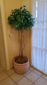 Artificial plant plastic plant fake large real terracotta pot Redland Bay Redland Area Preview
