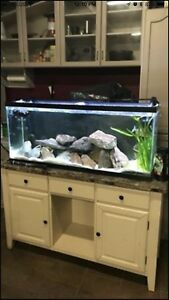 55 gallon tank with everything you need