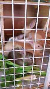 Baby Bunnies Noranda Bayswater Area Preview
