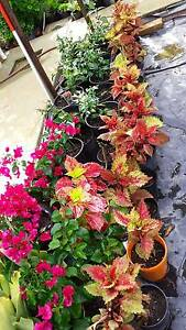 CHEAP PLANTS FOR GARDENING FROM $2 Marsden Logan Area Preview