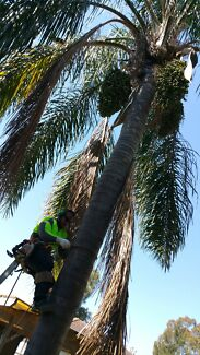 TREE FELLING AND STUMP GRINDING Mount Druitt Blacktown Area Preview