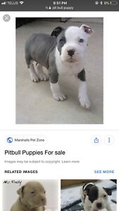 Looking for a puppy