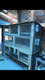 Guinea-pig / Rabbit Cage