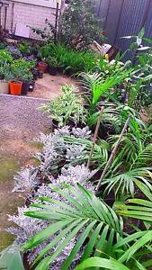 LOTS & LOTS OF CHEAP PLANTS TO CLEAR FROM $2 Marsden Logan Area Preview