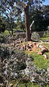 Cheap Tree Service (All Sydney Free Quotes) Lidcombe Auburn Area Preview