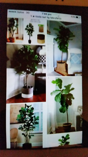 Wanted: WANTED TO BUY ARTIFICAL PLANTS /CASH PAID