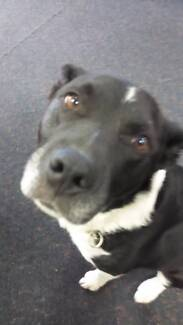 Scoopy wants a new home. Blacktown Blacktown Area Preview