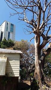 Tree lopper service / lopping & removal services Samford Valley Brisbane North West Preview