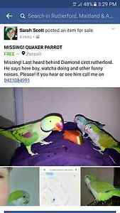 Lost! Green Quaker Parrot Rutherford Maitland Area Preview
