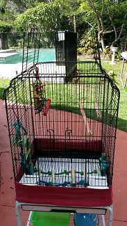 Budgie cage and accessories