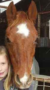 **12.2hh comapnion pony/leadline pony** Moana Morphett Vale Area Preview
