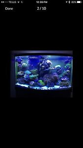 90 gallon bow front  complete reef setup with fish and corals