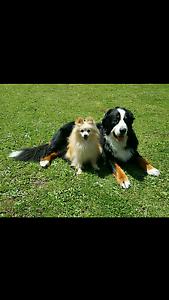 Jac's Dog Minding Service. Kyneton Macedon Ranges Preview