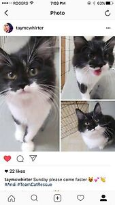(REWARD) Lost Cat Stevenson and Rossland Rd. Oshawa