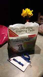 Puppy training pads, lead and collar Balberra Mackay Surrounds Preview