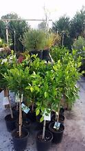 HUGE PLANT SALE EVERY FRIDAY, SATURDAY AND SUNDAY 9AM TO 5PM Skye Frankston Area Preview