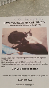 Missing cat (black and white) Chigwell Glenorchy Area Preview