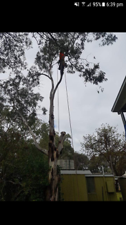 Mr Stumpy and tree removal