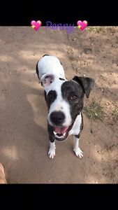 Penny 10mth med mixed breed female Ipswich Ipswich City Preview