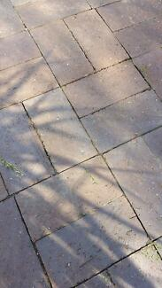 free clay brick pavers South Plympton Marion Area Preview
