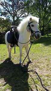 Leadline pony mare Uralla Uralla Area Preview