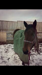 4 year old. Very quiet mare!