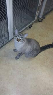 Litte Paws Kitten Rescue - Chase Meadowbrook Logan Area Preview