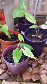 Variety of plants for sale