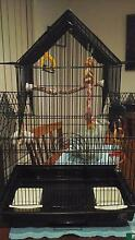 Medium to large bird cage with toys and food for sale Dunlop Belconnen Area Preview