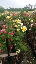HUGE PLANT SALE, WHOLESALE PRICES FRI, SAT, SUN 9AM TO 5PM Skye Frankston Area Preview