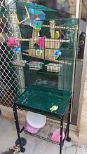 Two Budgies with a cage about 150cm tall Redcliffe Belmont Area Preview