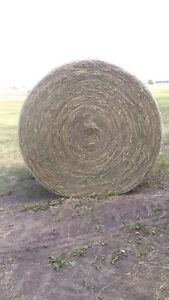 Rounds hay bales for sale