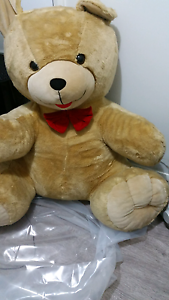 cuddly  bear Leppington Camden Area Preview
