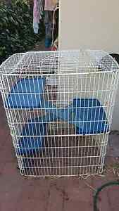 Guinea pigs  cage /Ferret  or mouses cage Shelley Canning Area Preview