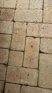 Caversham clay pavers >27sqm City Beach Cambridge Area Preview