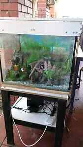 Fish tank all you need and stand Camillo Armadale Area Preview