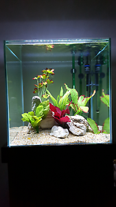 Rimless Cube Fish Tank Eheim 2215 Filter Heater LED Aquarium MORE Brighton-le-sands Rockdale Area Preview
