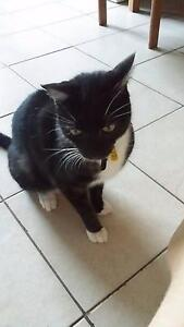 GIVE AWAY 6 YEAR OLD BEAUTIFUL CAT Samford Valley Brisbane North West Preview