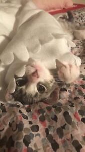 adorable kitten for adoption!