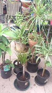 PLANTS MIX VARIETY Burwood Burwood Area Preview