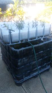 Ibc aquaponics setup